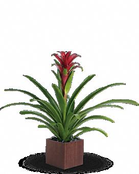 Teleflora's Bromeliad Beauty Plant
