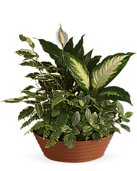 Serene Retreat Plant