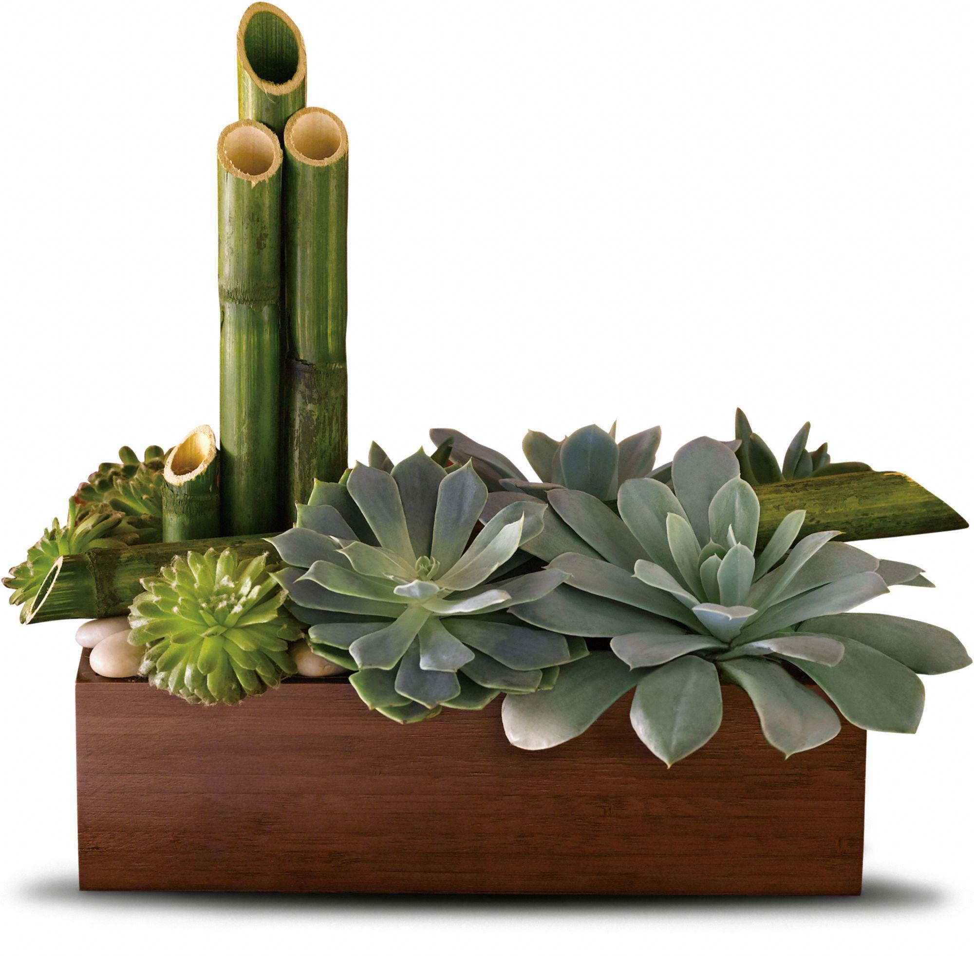 Peaceful Zen Garden succulents in bamboo container