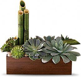 Peaceful Zen Garden succulents