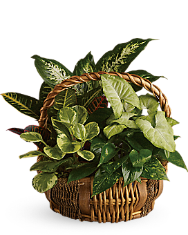 Emerald Garden Basket Basket Arrangement