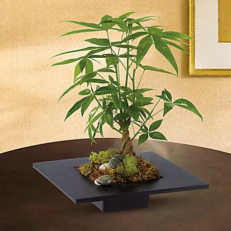 Money Tree Plant Teleflora