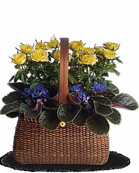 Garden To Go Basket Basket Arrangement
