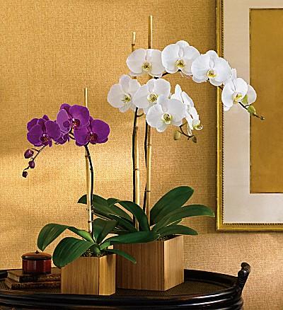 Teleflora's Opulent Orchids