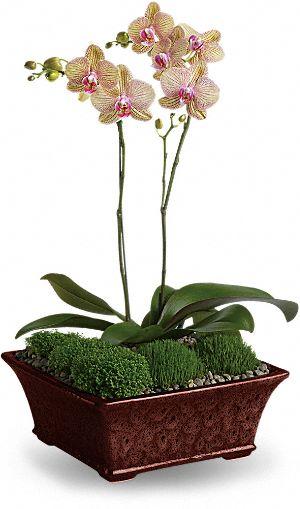 Divine Orchid Bouquet