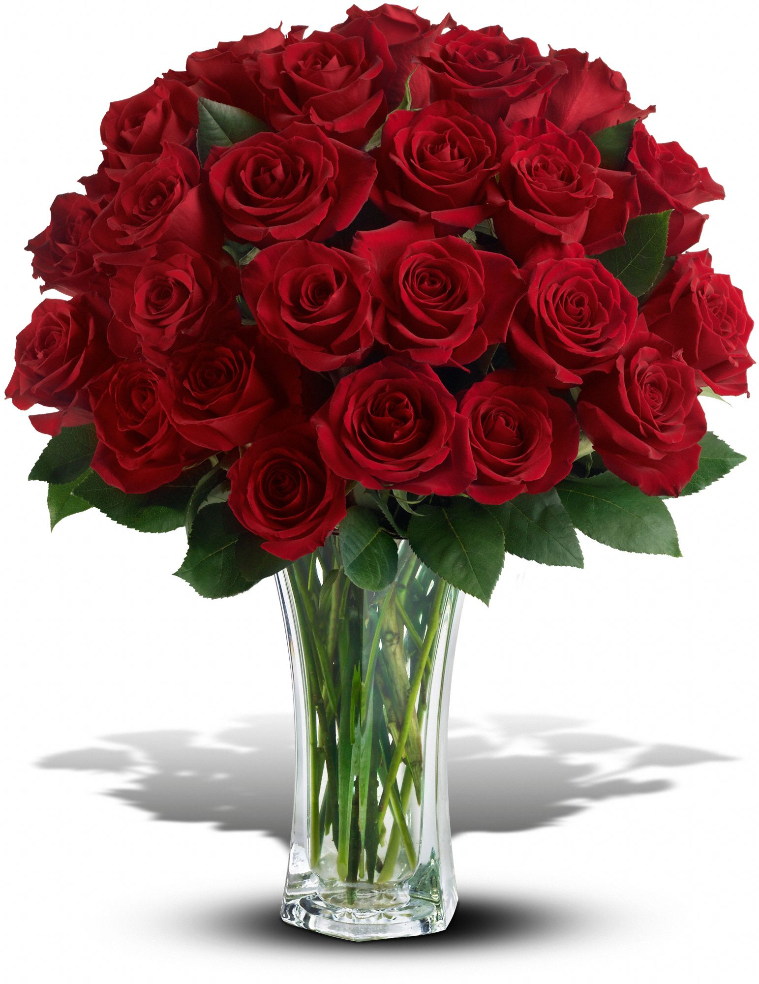 Love and devotion 24 long stemmed red roses